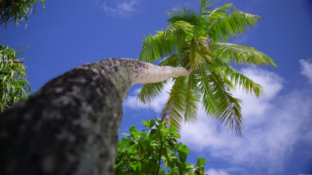 a palm tree on a scenic tropical island in fiji. - tropical tree stock videos & royalty-free footage