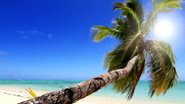 palm tree on a tropical island - tropical tree stock videos & royalty-free footage
