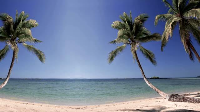 Palm tree on beach overlooking ocean