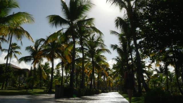 palm tree on blue sky - tourist resort stock videos & royalty-free footage