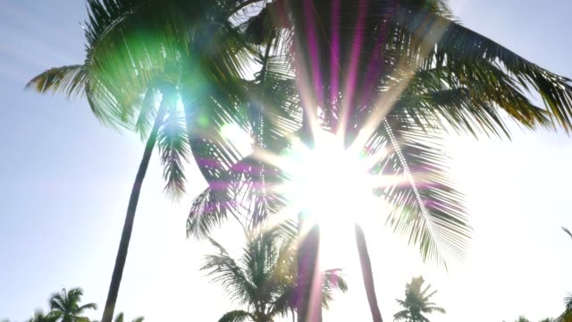palm tree on blue sky - punta cana stock videos and b-roll footage
