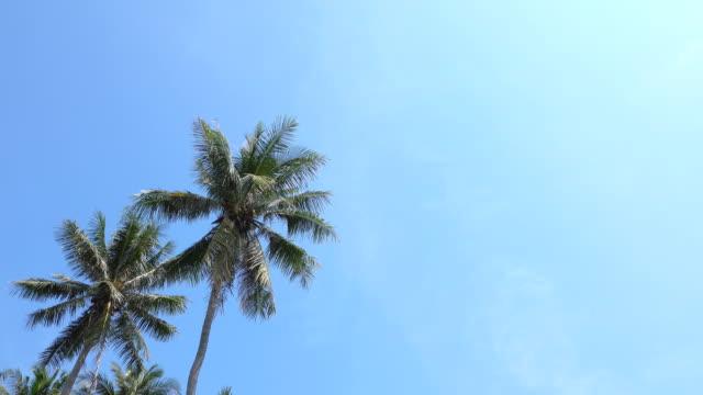 palm tree on blue sky - palm tree stock videos & royalty-free footage