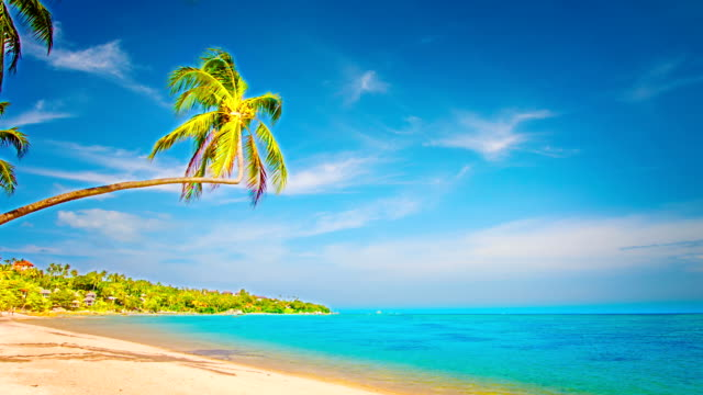 palm tree on the beach - punta cana stock videos and b-roll footage