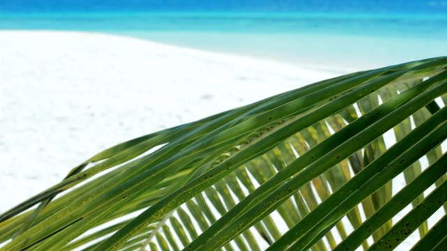 palm tree on the beach - desert island stock videos & royalty-free footage