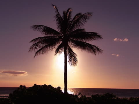 Palm tree on the beach.