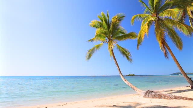 palm tree on the summer beach - water's edge stock videos & royalty-free footage