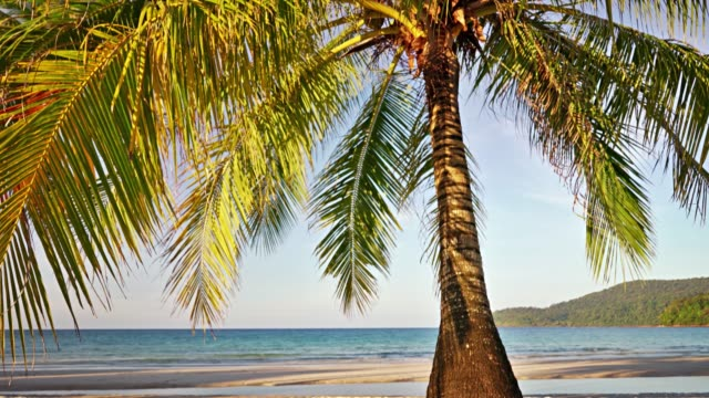 palm tree on the tropical beach - tropical tree stock videos & royalty-free footage