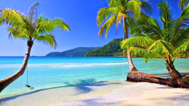 palm tree on the tropical beach - palm stock videos & royalty-free footage