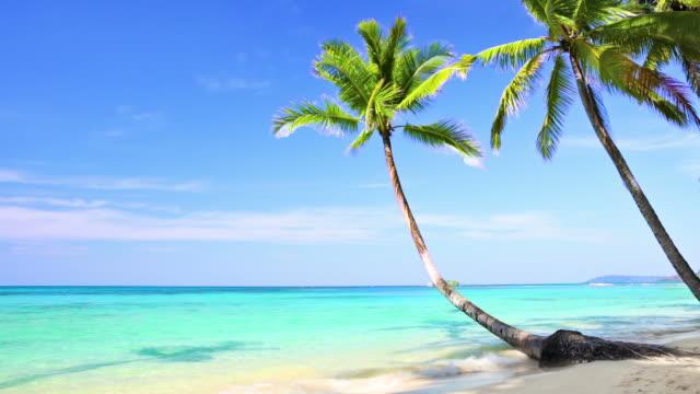 palme am tropischen strand - standbildaufnahme stock-videos und b-roll-filmmaterial