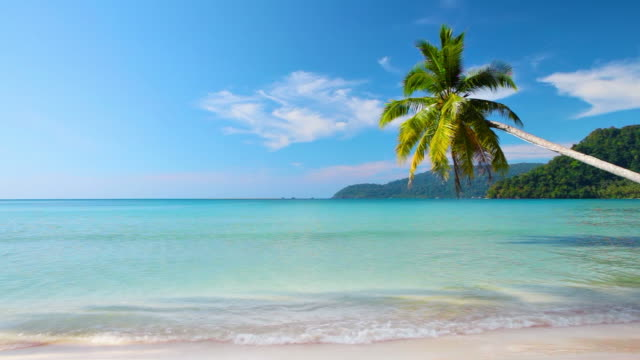 palm tree on the tropical beach - palm tree stock videos & royalty-free footage