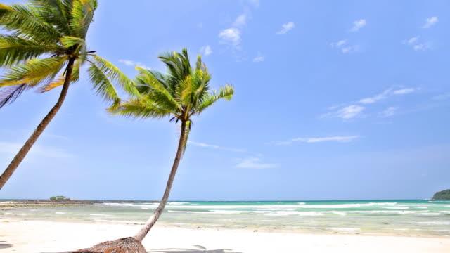 ヤシの木の白い砂のビーチ - ヤシ点の映像素材/bロール