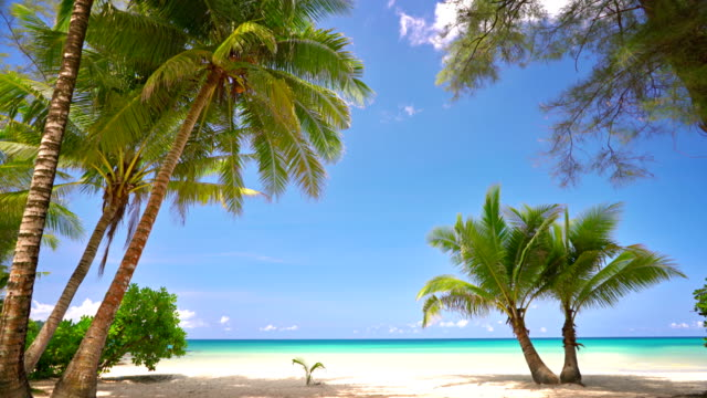 palm tree on tropical beach - idyllic stock videos & royalty-free footage