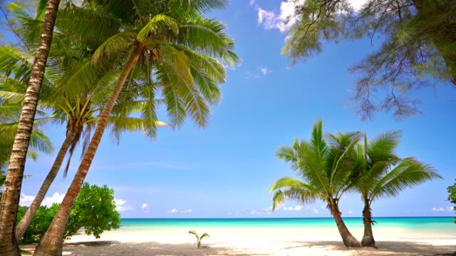 vidéos et rushes de palmier sur la plage tropicale - paradisiaque