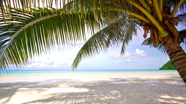 stockvideo's en b-roll-footage met palmboom op vakantie strand - caraïbische zee