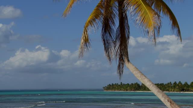 stockvideo's en b-roll-footage met ms, palm tree over caribbean sea, saona island, dominican republic - caraïbische zee