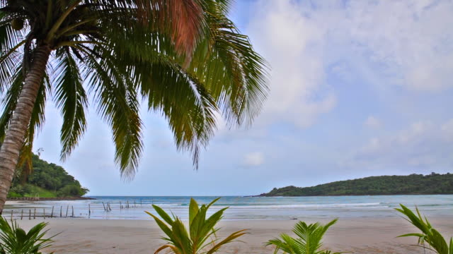 palm tree over tropical beach - tropical tree stock videos & royalty-free footage