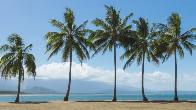 palm tree / queensland, australia - small group of objects stock videos & royalty-free footage