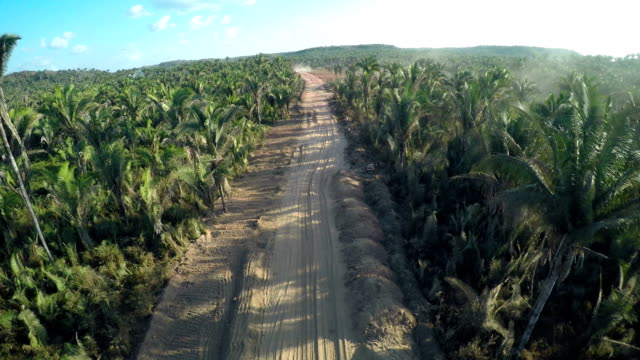 palm tree road in santo antônio dos lopes, ma, brazil - tropical tree stock videos & royalty-free footage