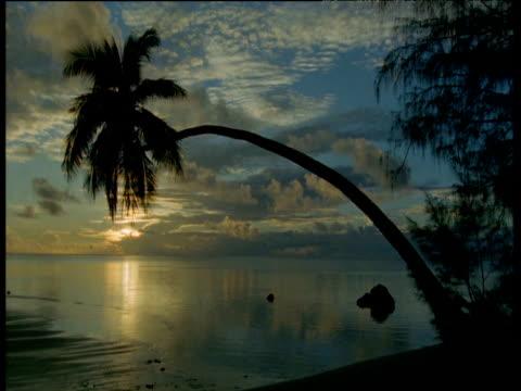 palm tree silhouetted on beach at sunset, aitutaki island - aitutaki stock videos & royalty-free footage