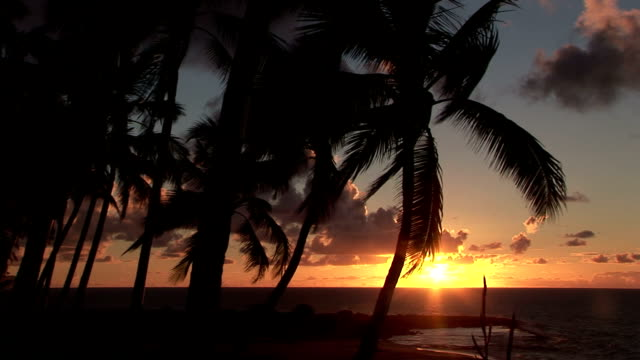 palm tree silhouettes appear at sunrise. - 顕花植物点の映像素材/bロール