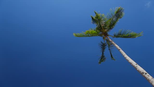 palm tree swaying - single tree stock videos & royalty-free footage