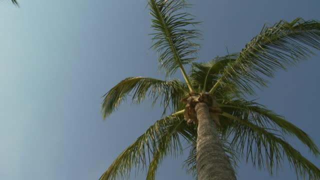 vídeos y material grabado en eventos de stock de cu, la, palm tree top against blue sky, abaco islands, bahamas - palmera abanico