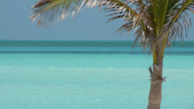 cu, palm tree top with turquoise ocean in background, abaco islands, bahamas - palma nana video stock e b–roll