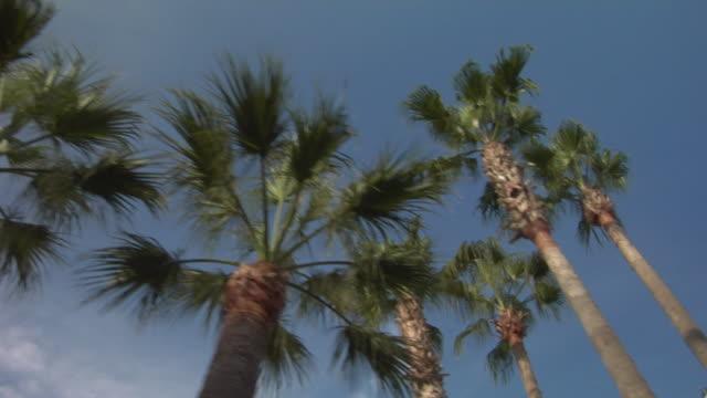 pov, la, palm tree tops along promenade de la croisette, cannes, france - fan palm tree stock videos & royalty-free footage