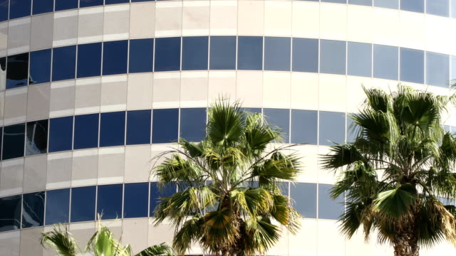 palm tree tops swaying the wind in front of office building 4k video with pan - silicon valley stock videos & royalty-free footage
