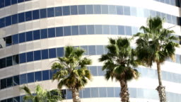 Palm tree tops swaying the wind in front of office building 4k video static version