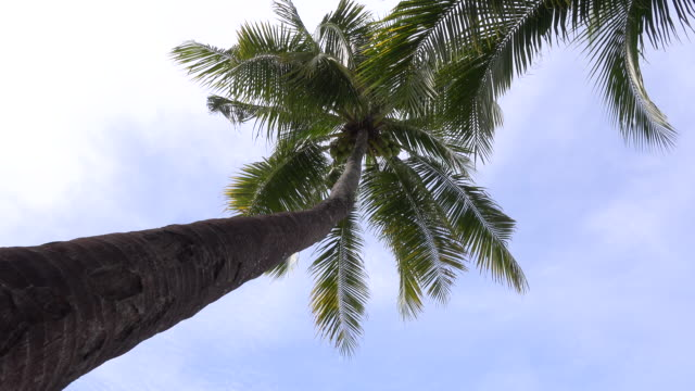 palm tree tops - palm leaf stock videos & royalty-free footage