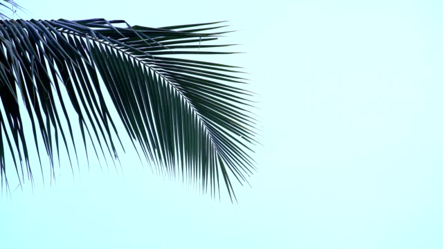 palm tree tops - foglia video stock e b–roll