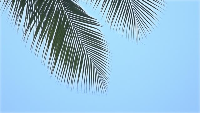 palm tree tops - swaying stock videos & royalty-free footage