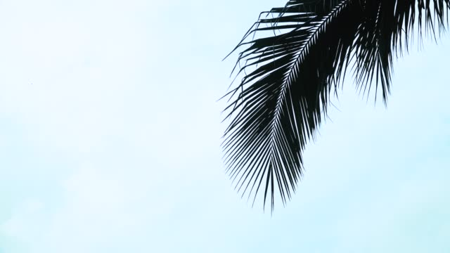 palm tree tops - palm leaf stock videos and b-roll footage