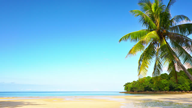 palm tree. tropical beach. luxury travel - coconut palm tree stock videos & royalty-free footage