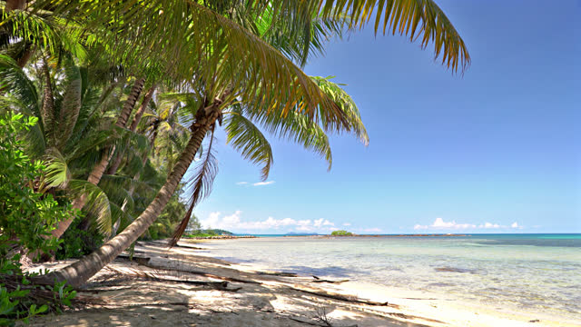 palm tree. tropical beach. nature. sea. - tropical tree stock videos & royalty-free footage