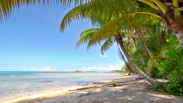 palm tree tropical beach - tropical tree stock videos & royalty-free footage