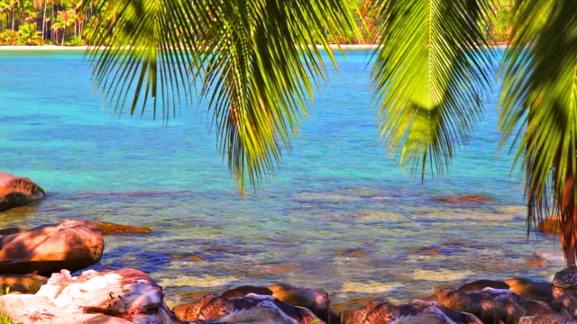 palm tree twig bend over sea water - twig stock videos & royalty-free footage