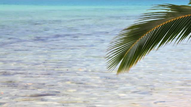 vídeos de stock, filmes e b-roll de palmeira galho de asa de água do mar - ramo parte de uma planta