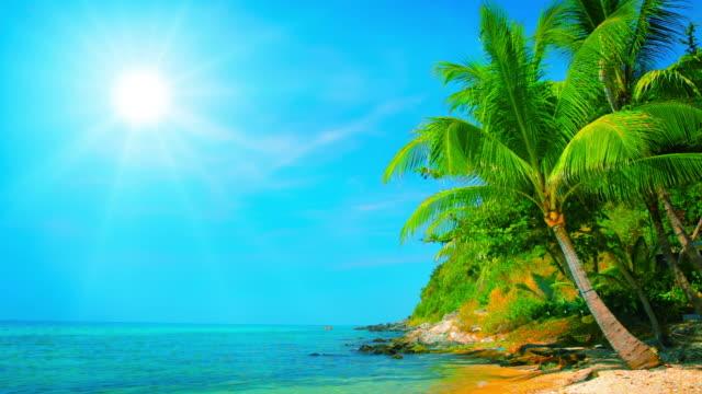 ヤシの木がトロピカルな太陽の下で - 熱帯気候点の映像素材/bロール