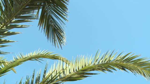 hd: palm tree - palm leaf stock videos & royalty-free footage