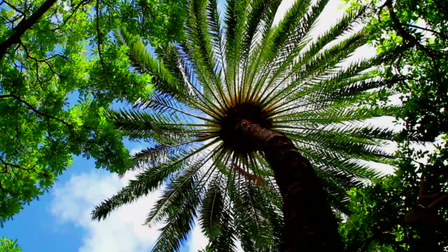 palm tree - big island hawaii islands stock videos & royalty-free footage