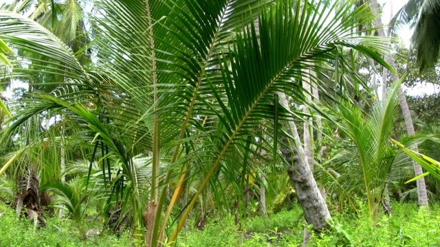 hd: palm tree - tayrona national park stock videos and b-roll footage