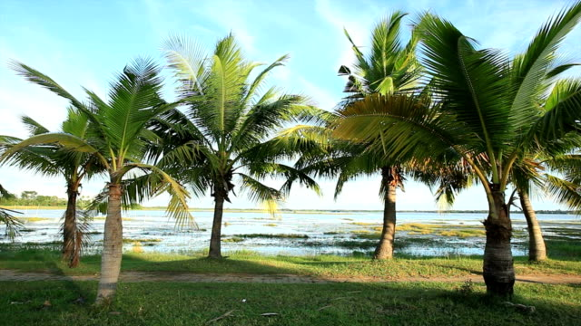 palm tree - tropical tree stock videos & royalty-free footage