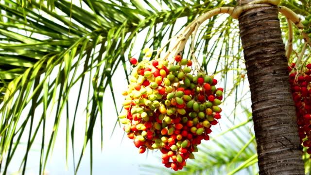 vídeos de stock, filmes e b-roll de de palmeira  - territórios ultramarinos franceses