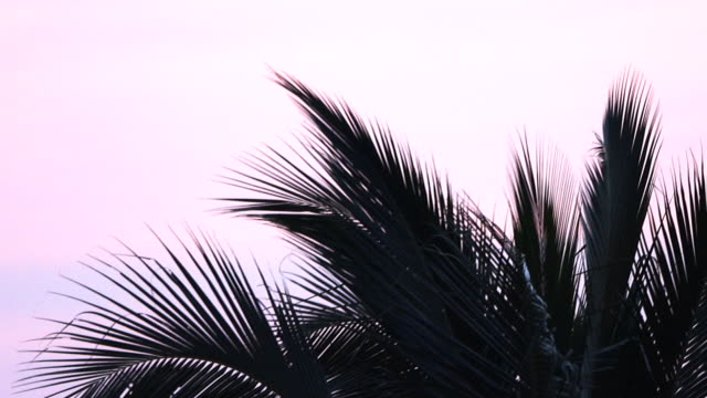 4k: palm tree - palm leaf stock videos & royalty-free footage