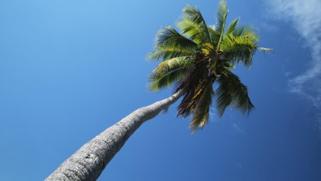 vidéos et rushes de palm tree  - île d'huahine