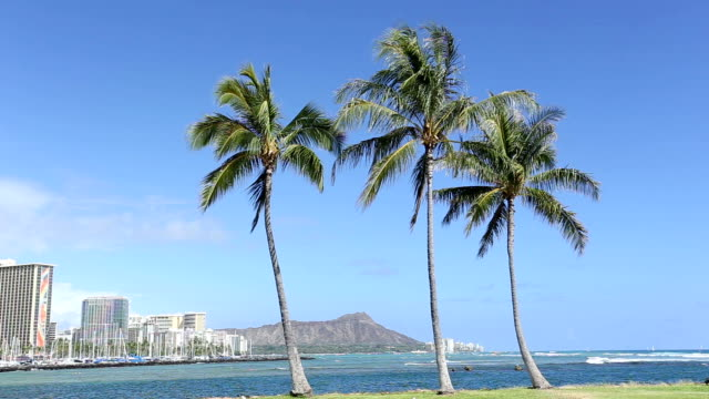stockvideo's en b-roll-footage met hd palm tree with diamond head mountain background - oahu