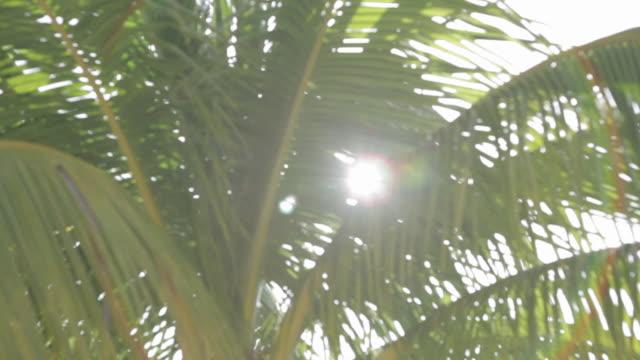 vídeos y material grabado en eventos de stock de palmera con el sol y de la llamarada - playa del carmen