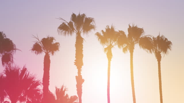 palm trees - 4k - san diego stock videos & royalty-free footage